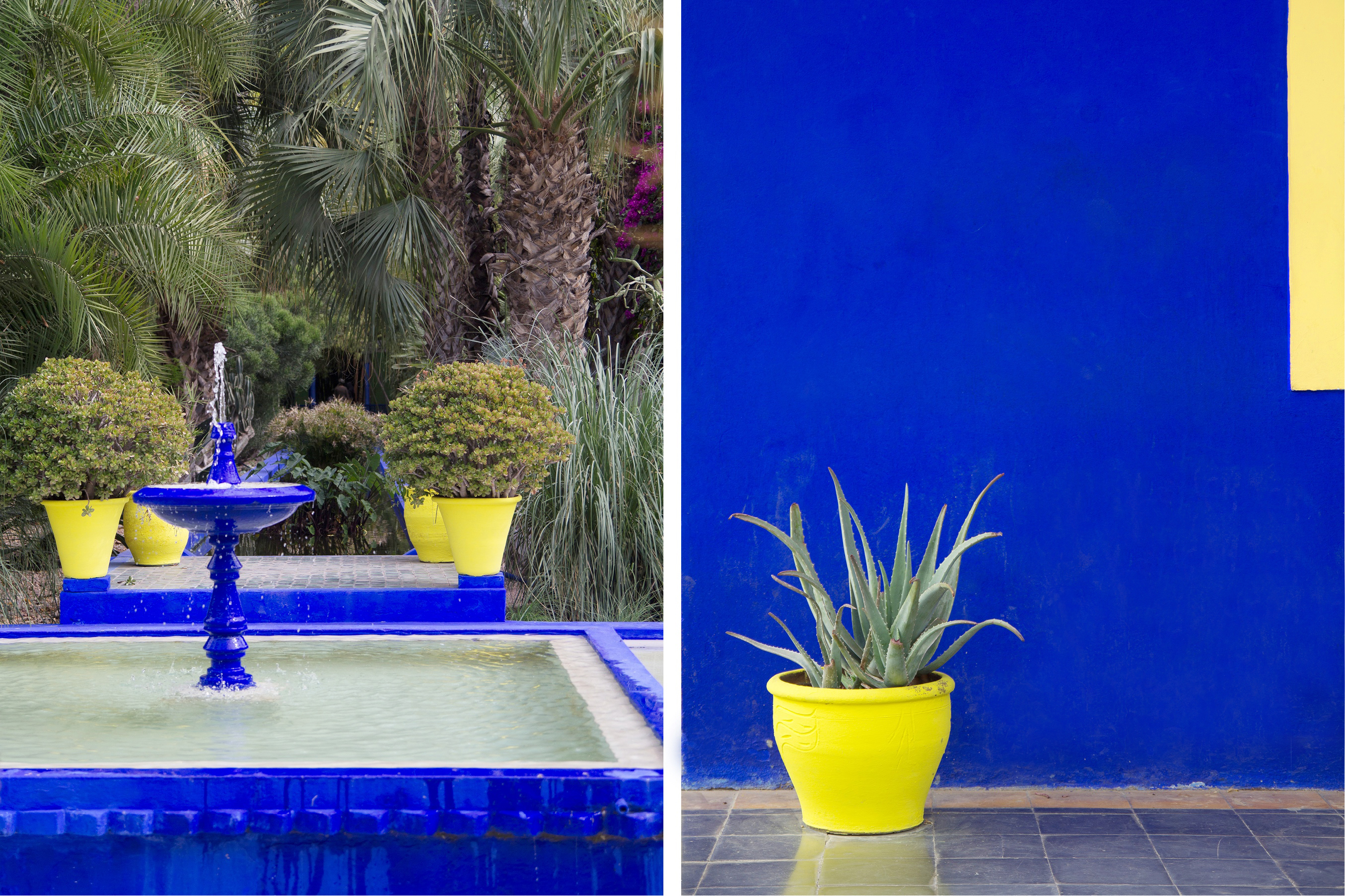 Jardin majorelle marrakech the fresh light for Jardin majorelle